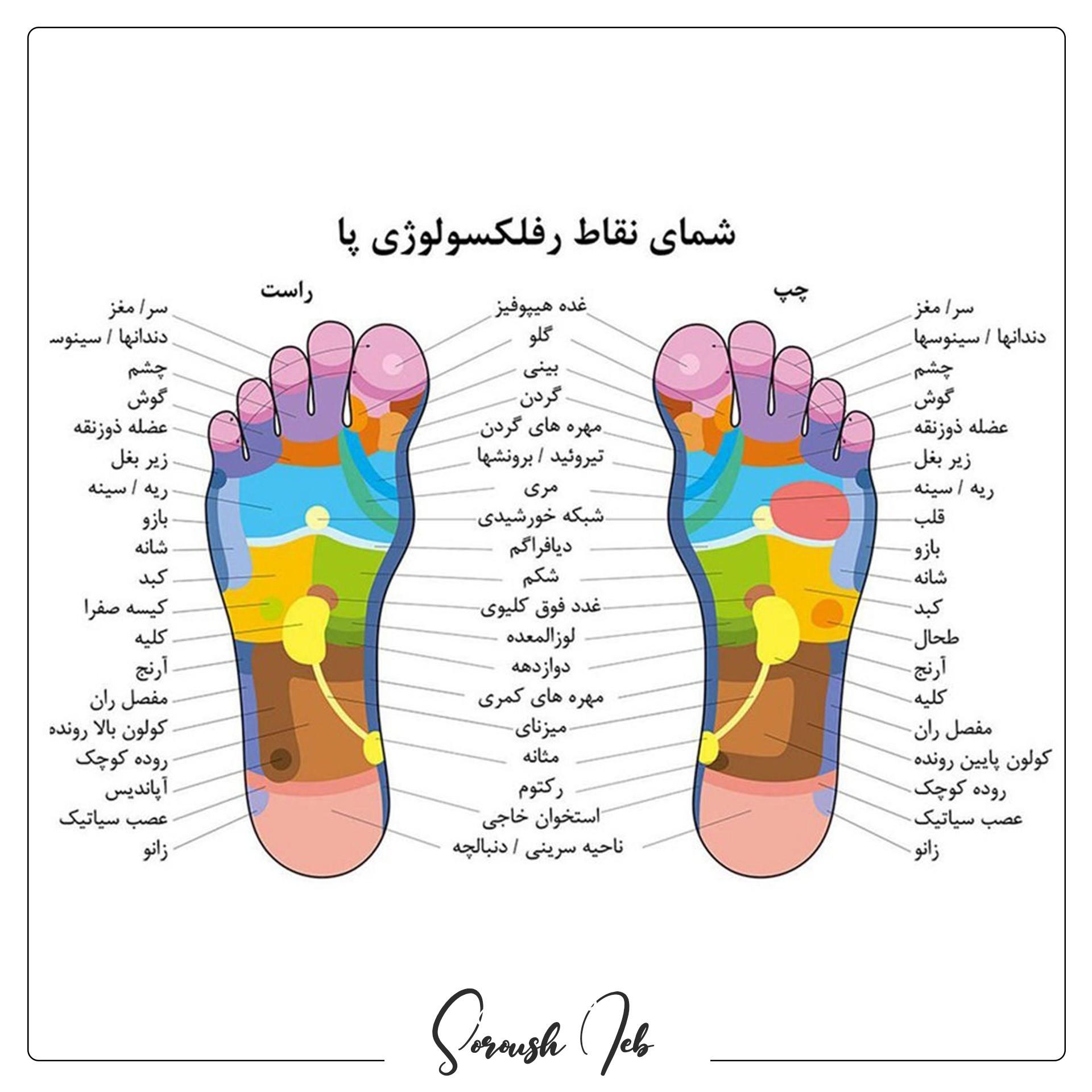 نقاط رفلوکسوژی پا که با اندام های مختلف بدن در ارتباط است